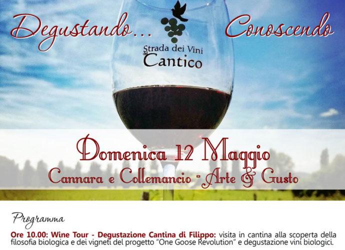 Degustando...-Conoscendo-la-Strada-dei-Vini-del-Cantico-locandina-copertina