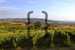 Vigna Monticchio